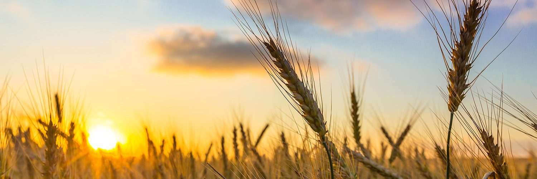 farm-scene-1