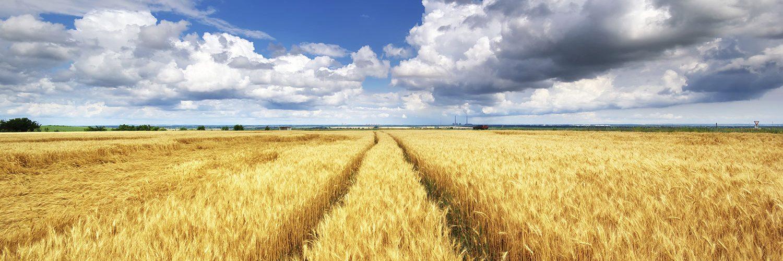 farm-scene-4