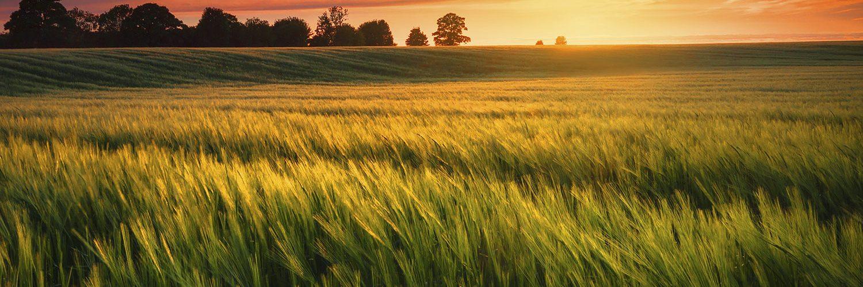 farm-scene-5
